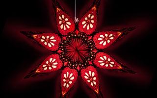 Aktuelles - Neuer Online Shop für Weihnachtssternexperte STARBALL